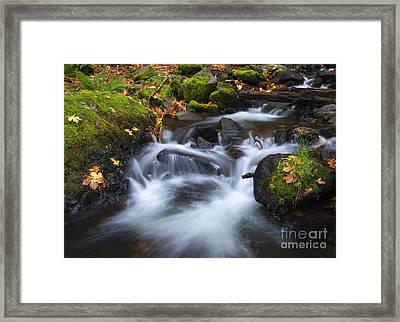 Splitting The Forest Framed Print