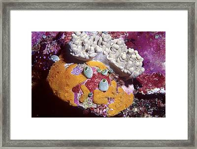 Sponge Head Framed Print