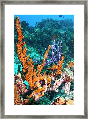 Sponges On A Reef Framed Print