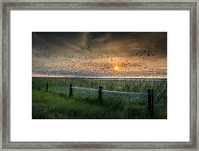 Spooked Geese Framed Print