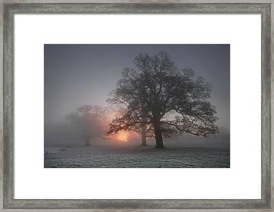 Spooky Misty Morning  Framed Print