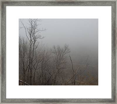 Spooky Scary Trees Framed Print