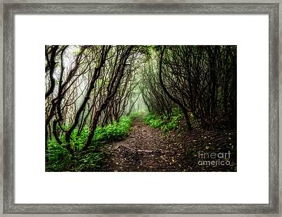 Spooky Trail Framed Print