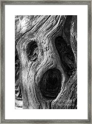 Framed Print featuring the photograph Spooky Tree by Mitch Shindelbower