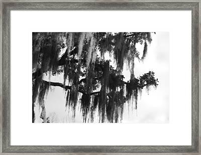 Spooky Trees Framed Print by Cyndi Lenz