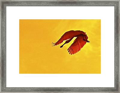 Spoonbill At Sunset Framed Print