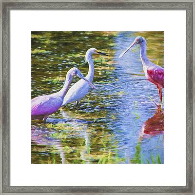 Spoonbill Flamingos And Great American Egret Framed Print by David Wagner