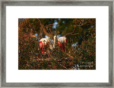 Framed Print featuring the photograph Spoonbill Love Nest by John F Tsumas