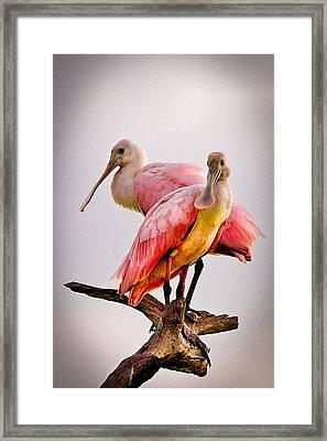 Spoonbills II Framed Print