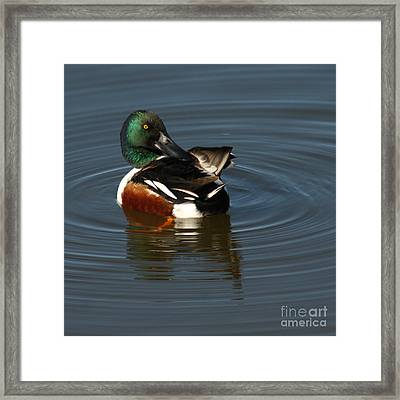 Framed Print featuring the photograph Spooney by Bob and Jan Shriner