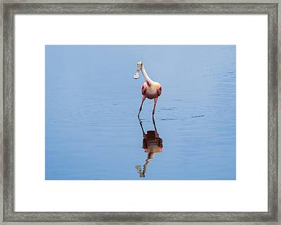 Framed Print featuring the photograph Spoonie Striking A Pose by John M Bailey
