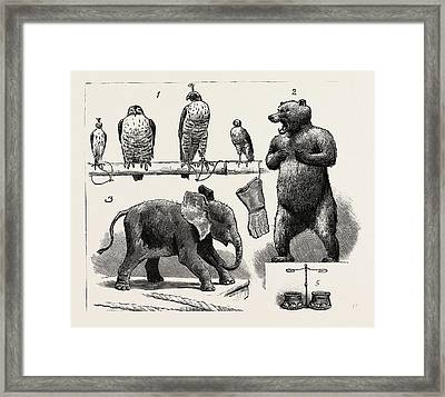 Sport Illustrated By Art At The Grosvenor Gallery Framed Print by English School