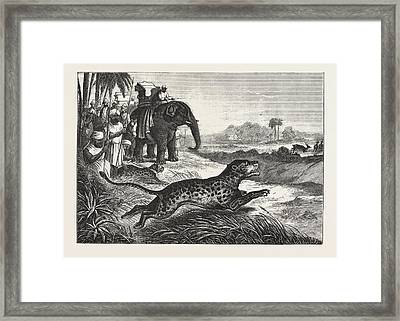 Sport In India, Hunting Antelopes With The Cheetah Framed Print