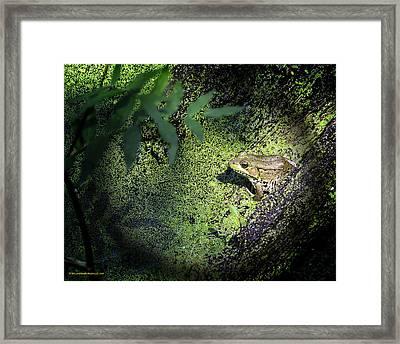 Spot Light On The Swamp Frog Framed Print by LeeAnn McLaneGoetz McLaneGoetzStudioLLCcom