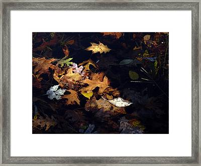 Spot Lighting Framed Print by Marcia Lee Jones