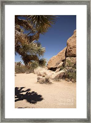 Spot Of Shade Framed Print by Amanda Barcon