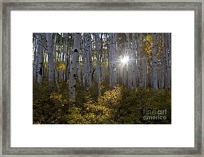 Spot Of Sun Framed Print by Jeff Kolker