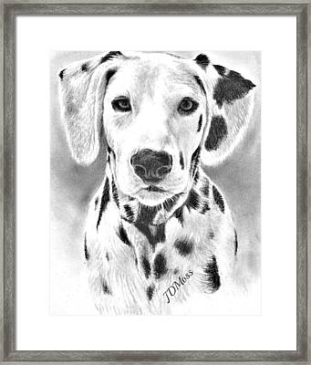 Spots Everywhere Framed Print by Janet Moss