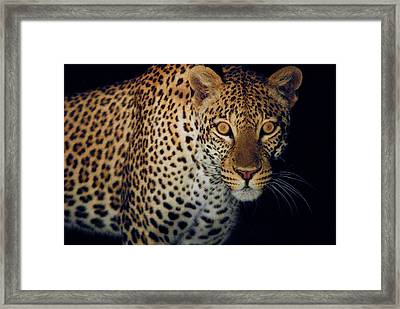 Spotted At Night Framed Print by Stefan Carpenter