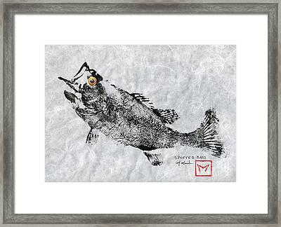 Spotted Bass Gyotaku Framed Print by Matt Monahan