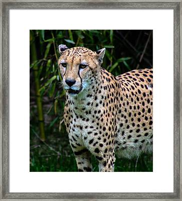 Spotted Beaut Framed Print