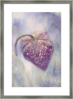 Spotted Beauty Framed Print by Faith Simbeck