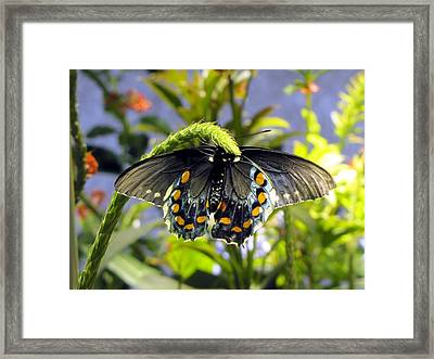 Spotted Beauty Framed Print by Jennifer Wheatley Wolf