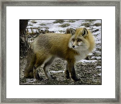 Spotted By A Red Fox Framed Print