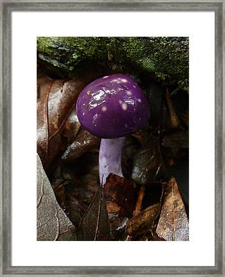 Framed Print featuring the photograph Spotted Cortinarius Mushroom by William Tanneberger