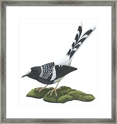 Spotted Forktail Framed Print by Anonymous