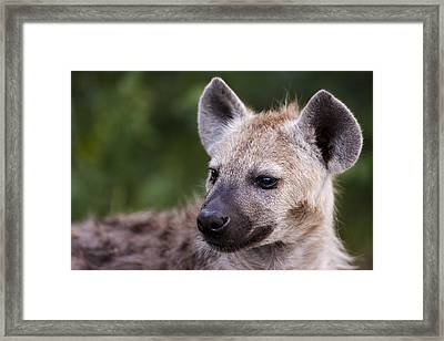 Spotted Hyena Framed Print by Sean McSweeney