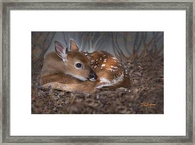 Spotted Innocence Framed Print by Don Anderson