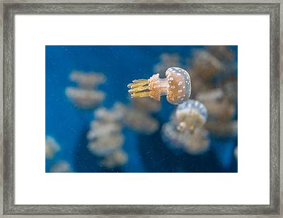 Spotted Jelly Aliens 1 Framed Print by Scott Campbell