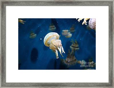Spotted Jelly Fish 5d24950 Framed Print by Wingsdomain Art and Photography