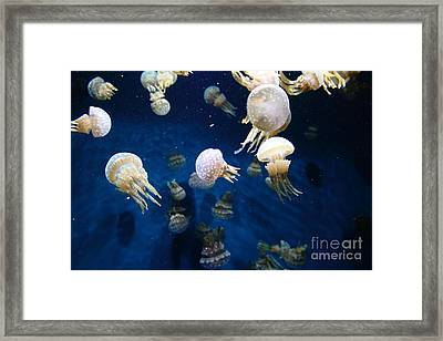Spotted Jelly Fish 5d24951 Framed Print