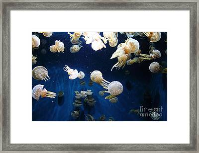Spotted Jelly Fish 5d24952 Framed Print
