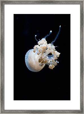 Spotted Jelly Framed Print by Scott Campbell
