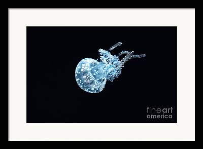 White Spotted Jelly Fish Framed Prints