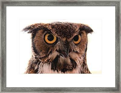 Spotted Owl 1 Framed Print