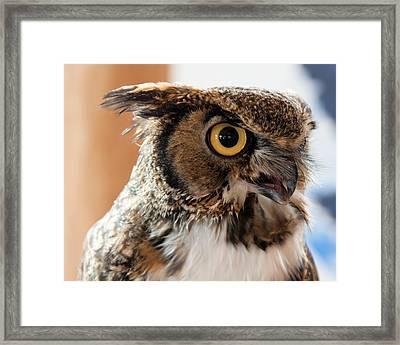 Spotted Owl 2 Framed Print