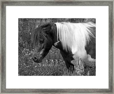 Spotted Pony Framed Print by Joyce  Wasser