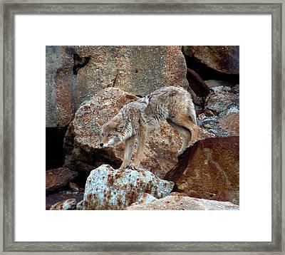 Spotting Prey Framed Print by Karen Wiles