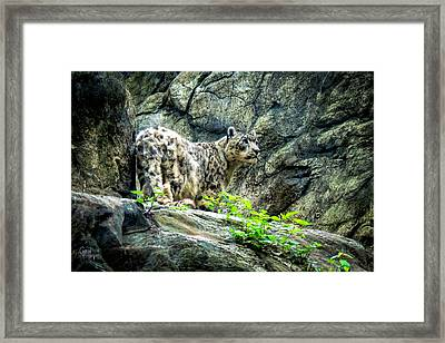 Spotty Thoughts Framed Print