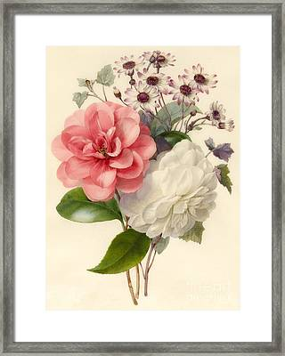 Spray Of Three Flowers Framed Print by Marie Anne