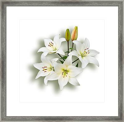 Spray Of White Lilies Framed Print