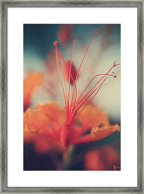 Spread The Love Framed Print