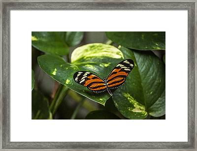 Spread Your Wings Framed Print by Ginger Harris
