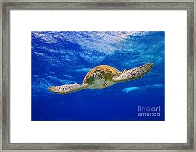 Spread Your Wings Framed Print