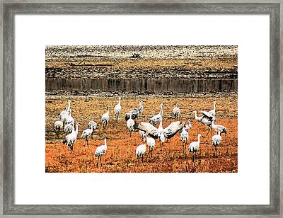 Spread Your Wings Framed Print by Lorna Rogers Photography