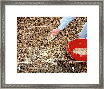 Spreading Grass Seeds Framed Print by Science Photo Library